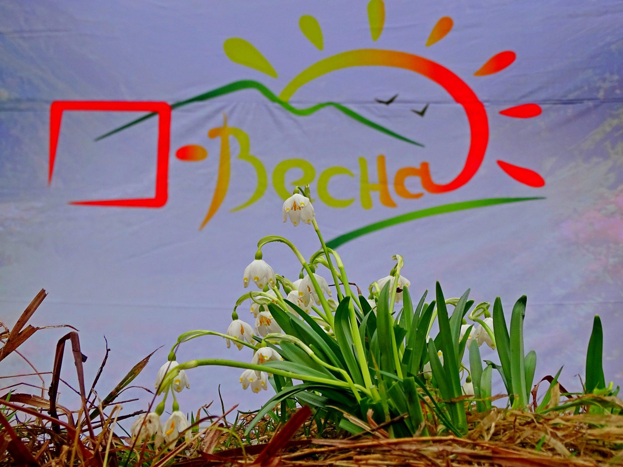 «О-Весна». фото
